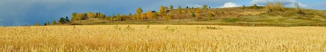 Getreidemuelne-info-Startbild