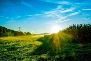 landscape 503925 1920 300x200 - Gerste -
